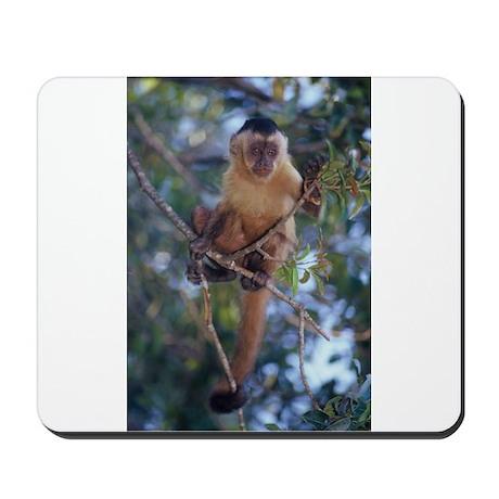 Capuchin Monkey Mousepad
