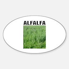 Alfalfa Oval Decal