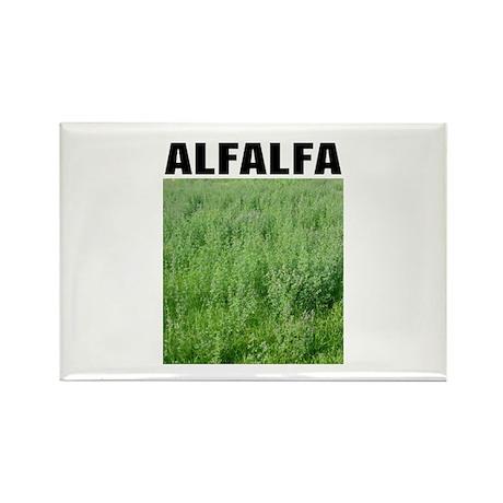 Alfalfa Rectangle Magnet (10 pack)