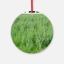 Alfalfa Ornament (Round)