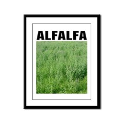 Alfalfa Framed Panel Print