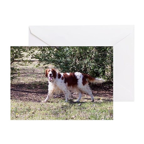 My Boy Greeting Cards (Pk of 10)