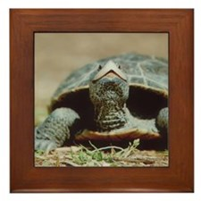 Terrapin Framed Tile