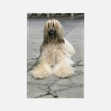 Helaine's Afghan Hound Rectangle Magnet