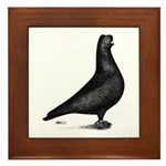Prager Shortface Pigeon Framed Tile