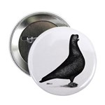 "Prager Shortface Pigeon 2.25"" Button (10 pack"