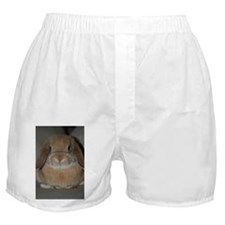 Holland Lop Bunny Boxer Shorts