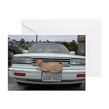 California Cat Greeting Cards (Pk of 10)
