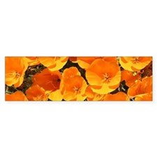 Helaine's California Poppies Bumper Bumper Sticker