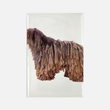 Bergamasco Sheepdog Rectangle Magnet (100 pack)