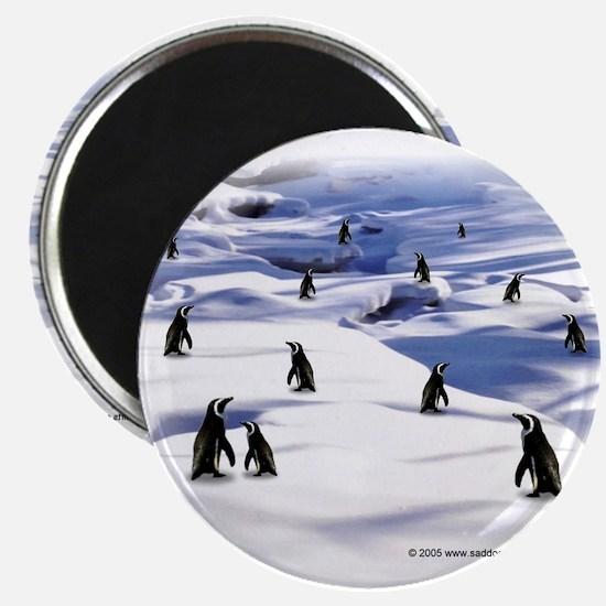 """Penguin Scene 2.25"""" Magnet (10 pack)"""