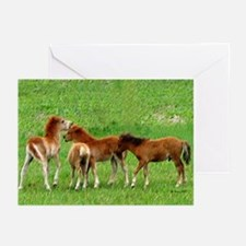 Mini Colts Playing In Field Greeting Cards (Packag
