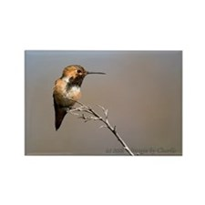 Allen's Hummingbird Rectangle Magnet Bare Branch