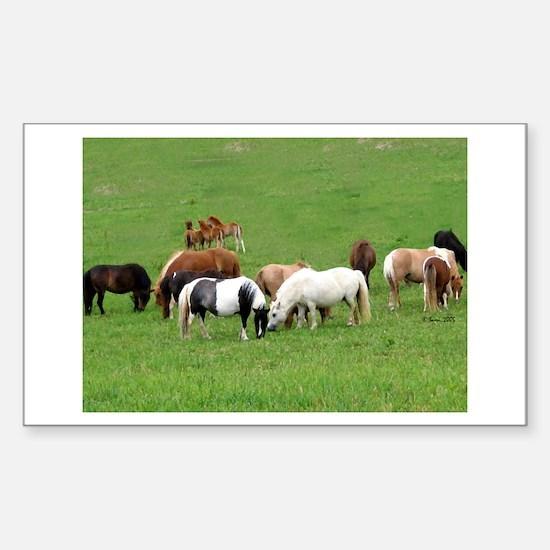 Mini Horses in Pasture Rectangle Decal