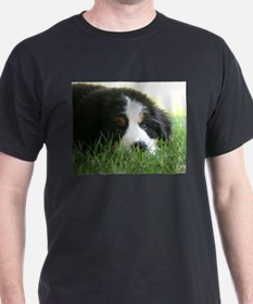 Bernese Puppy T-Shirt