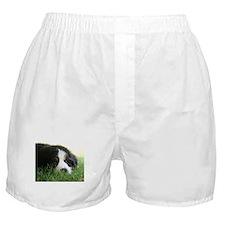 Bernese Puppy Boxer Shorts