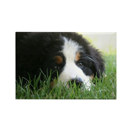 Bernese Puppy Rectangle Magnet (10 pack)