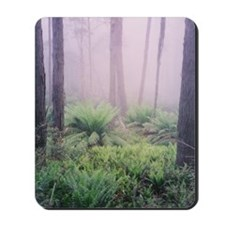 Misty Forest Photo, Victoria Mousepad