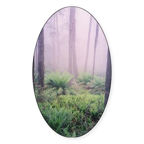 Misty Forest Photo, Victoria Oval Sticker