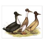 Crested Ducks Trio Small Poster