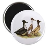 "Crested Ducks Trio 2.25"" Magnet (10 pack)"