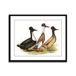 Crested Ducks Trio Framed Panel Print