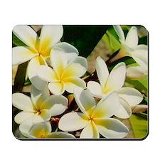 Frangipani/Plumeria Flowers Mousepad