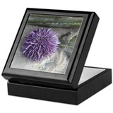 Sea urchin Square Keepsake Boxes