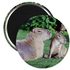 Capybara Mom and Son Magnet