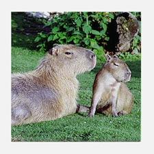 Capybara Mom and Son Tile Coaster
