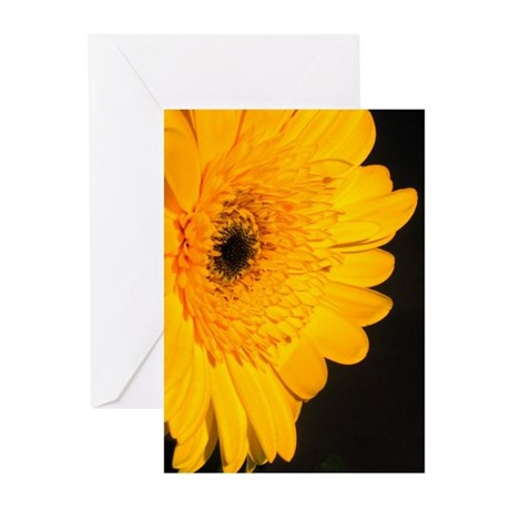Golden Gerbra Greeting Cards (Pk of 10)