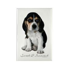 Beagle Puppy Dog Rectangle Magnet