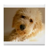 Goldendoodle Drink Coasters