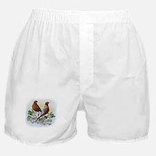 American Robin Boxer Shorts