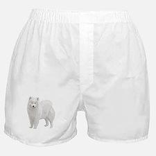 Beautiful Samoyed Boxer Shorts