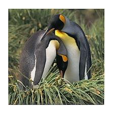 King Penguin Lovers Tile Coaster