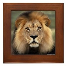 Lion Photograph Framed Tile Picture