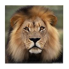 Lion Photograph Tile Coaster