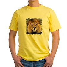 Lion Photograph T