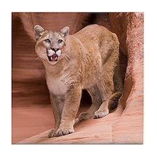 Cougar Tile Coaster