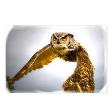 Unique Barn owl Postcards (Package of 8)