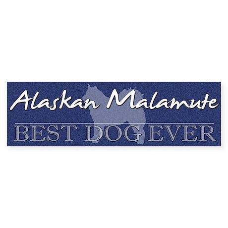 Best Dog Ever Alaskan Malamute Bumper Sticker