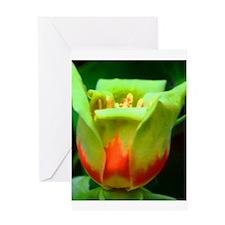 Tulip Poplar Greeting Card