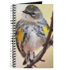 Curious Bird Journal
