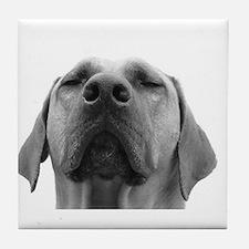 JUBA LEE RIDGEBACK Tile Coaster