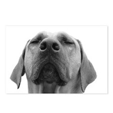 JUBA LEE RIDGEBACK Postcards (Package of 8)