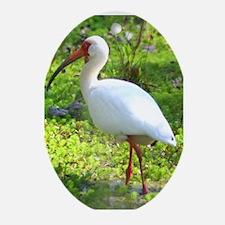 White Ibis Oval Ornament