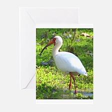 White Ibis Greeting Cards (Pk of 20)