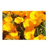 California poppies postcards Postcards
