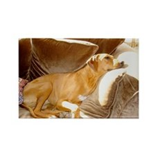 JUBA LEE RIDGEBACK Rectangle Magnet